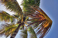 Lying under the palm Royalty Free Stock Photo