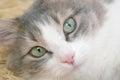 Lyinge cat lying on the side Royalty Free Stock Image
