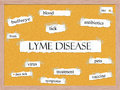 Lyme disease corkboard word concept with great terms such as bullseye tick bite pets and more Royalty Free Stock Image