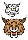 Lynx mascot head of or bobcat for sport team design with angry emotions Stock Photo