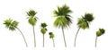 Målade art palm trees på vit Royaltyfri Foto