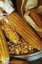Maïskolven - korrelmaïs Stock Afbeelding