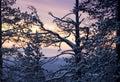 Mañana del invierno/luz del sol y siluetas de los árboles Foto de archivo libre de regalías