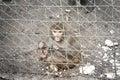 Macaco triste dentro de uma gaiola Foto de Stock Royalty Free