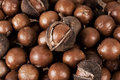 Macadamia nuts close up of still with outer husk Royalty Free Stock Image