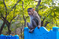 Macaque monkey on a bench on elephanta island Stock Image