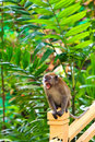 Macaque monkey hanging on a fence Stock Images