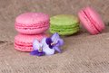 Macaroons in pink and light green with flowers violets Royalty Free Stock Photos