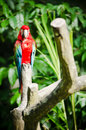 Macaw Bird Royalty Free Stock Photo