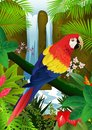 Macaw bird with nature background Royalty Free Stock Photography
