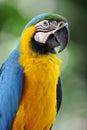 Macaw a close up shot of a parrot Stock Photos