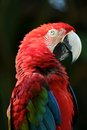 Macaw a close up shot of a parrot Stock Photos