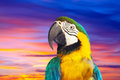 Macaw papagay against dawn sky closeup of Royalty Free Stock Images