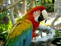 Macaw parrot: claws out Royalty Free Stock Images