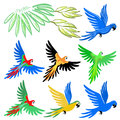 Macaw parrot pattern set vector illustration on white background Royalty Free Stock Photo
