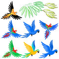 Macaw parrot pattern set vector illustration on white background Stock Image