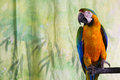 Macaw parrot perch Stock Image