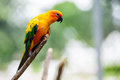 Macaw on the tree colorful Stock Image