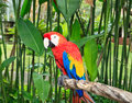 Macaw In Tropical Nature
