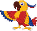 Macaw wing bird cartoon posing Royalty Free Stock Photo