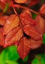 Machen Sie Blätter naß Stockfotografie
