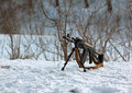 Machine gun ak located snow Stock Photo