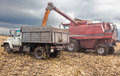 Machines for harvesting maize in autumn Royalty Free Stock Photos