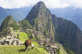 Machu picchu peru ancient inca lost city Royalty Free Stock Photos