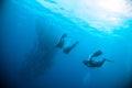 Mackerel barracuda kingfish diver blue scuba diving bunaken indonesia ocean Royalty Free Stock Photo