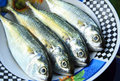 Mackerel fish close up in plate Stock Photography