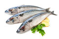 Mackerel fish scomber scrombrus over white background Stock Photo