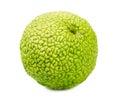 Maclura pomifera monkey brain fruit on a white background Stock Image