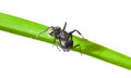Macro of ant on grass black standing green isolated white Royalty Free Stock Photos