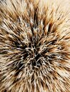 Macro background and texture of bristles and badger hair Royalty Free Stock Photo