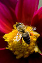 Macro bee Royalty Free Stock Photo