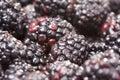 Macro Blackberries with Water Drops Stock Images