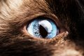 Macro of a blue cat eye Royalty Free Stock Photo