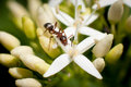 Macro brown ant Stock Photo