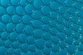 Macro Bubbles In Water