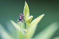 Macro bug on top of green plant curious little with long antennae sitting a Royalty Free Stock Photography