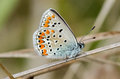 Macro butterfly photo of a on a branch Royalty Free Stock Images
