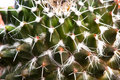 Macro of cactus spines. Royalty Free Stock Photography