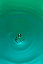Macro of clear water drop Royalty Free Stock Photo