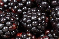Macro closeup of blackberries rubus or black raspberries Stock Photos