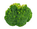 Macro closeup of broccoli floret isolated on white detailed Stock Image