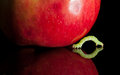 Macro of codling moth caterpillar moving to ripe apple inchworm and red isolated on black Stock Photos