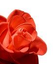 Macro color de rosa del rojo hermoso aislada en el fondo blanco Imagen de archivo libre de regalías