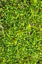 Macro detail of forest moss floor natural ground. Stock Photography