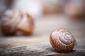 Macro detailed photo of spiral snail on wooden surface Royalty Free Stock Photo