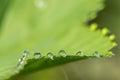 Macro Details Of Water Dew On ...